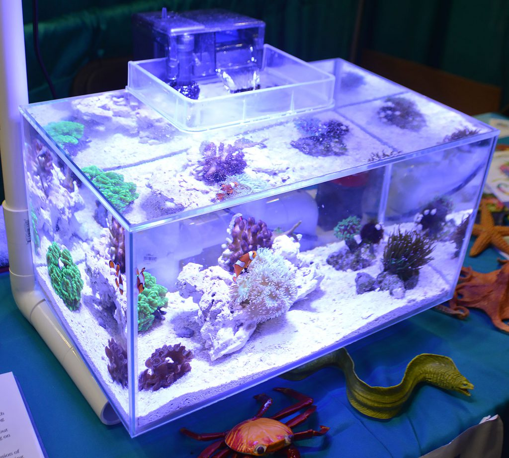Cincinnati Area Reef Enthusiasts showed off this interesting marine aquarium utilizing a Fluval Edge.