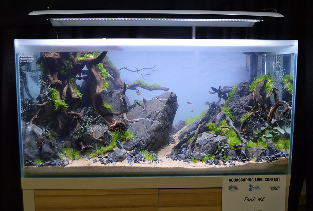 AGA Aquascaping Live 2016 Entry #2 - First Place Award Winner