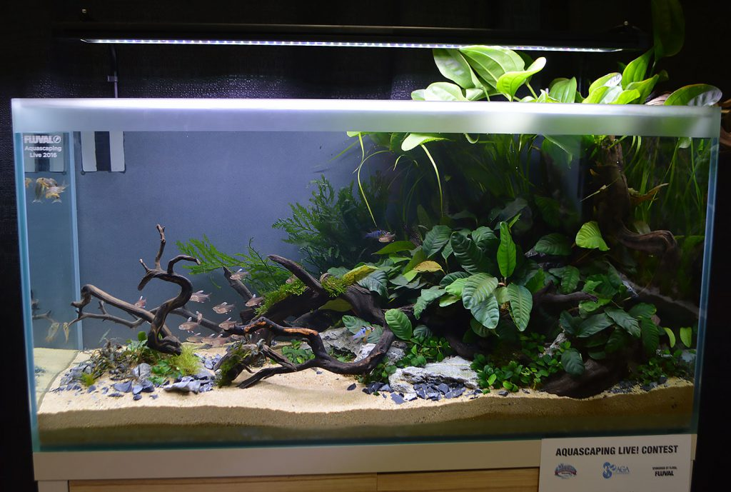 AGA Aquascaping Live 2016 Entry #3