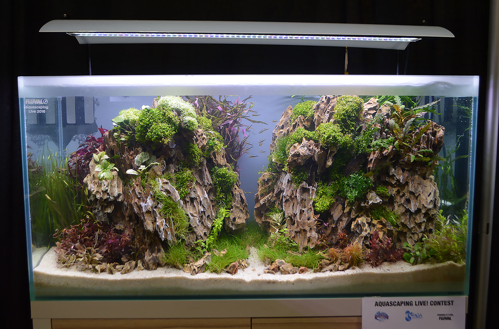 Amazing AGA Aquascaping Live 2016 Entry #4