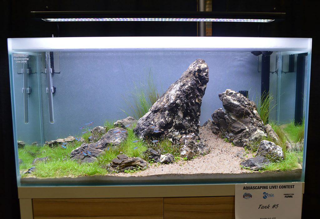 AGA Aquascaping Live 2016 Entry #5 - Second Place Award Winner