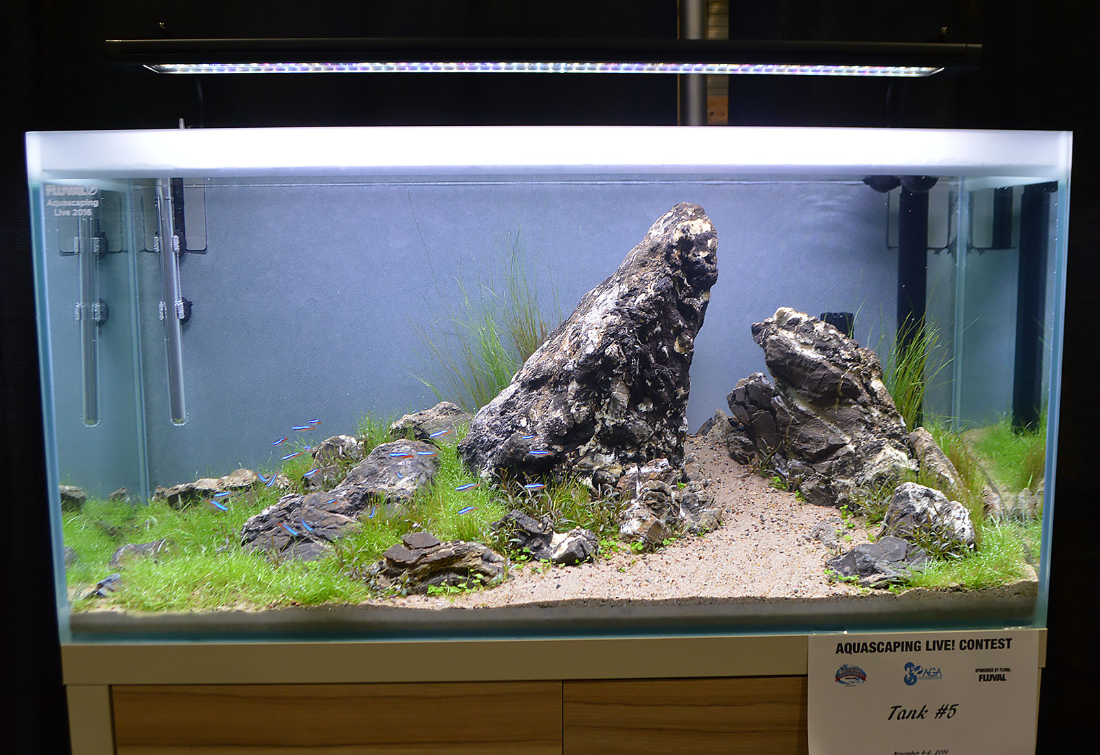 Fish tank water cloudy - Aga Aquascaping Live 2016 Entry 5 Second Place Award Winner