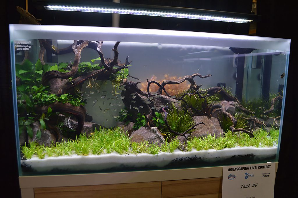 AGA Aquascaping Live 2016 Entry #6