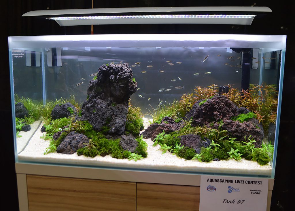AGA Aquascaping Live 2016 Entry #7 - Third Place Award Winner