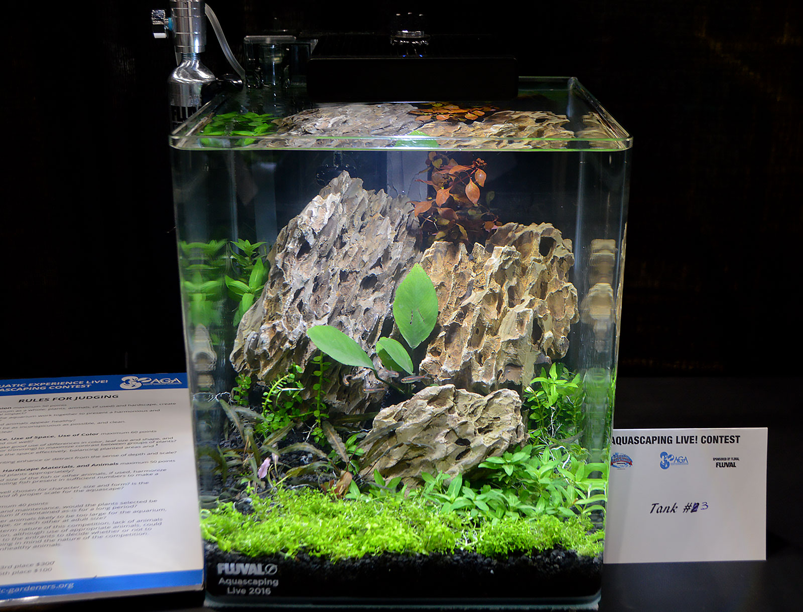Marvelous AGA Aquascaping Live 2016 Small Tank Entry #3