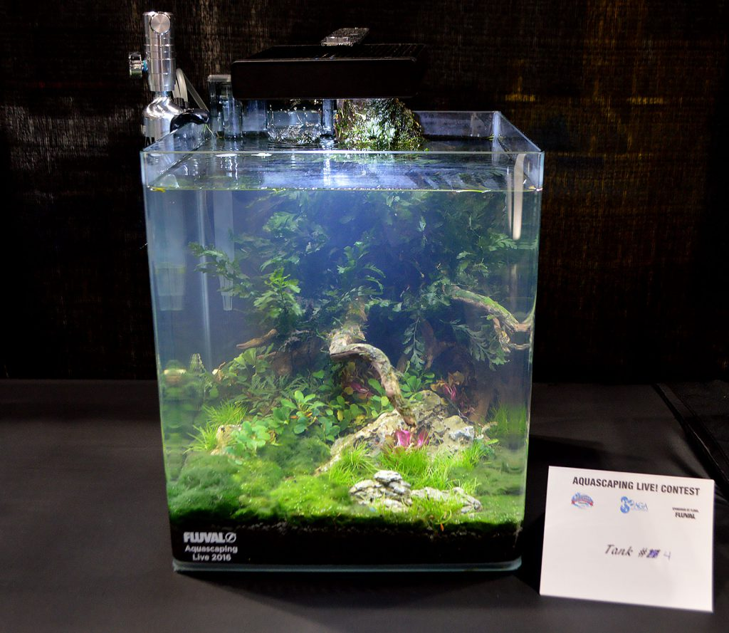 AGA Aquascaping Live 2016 Small Tank Entry #4
