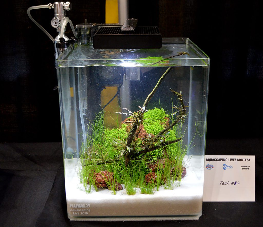 AGA Aquascaping Live 2016 Small Tank Entry #6
