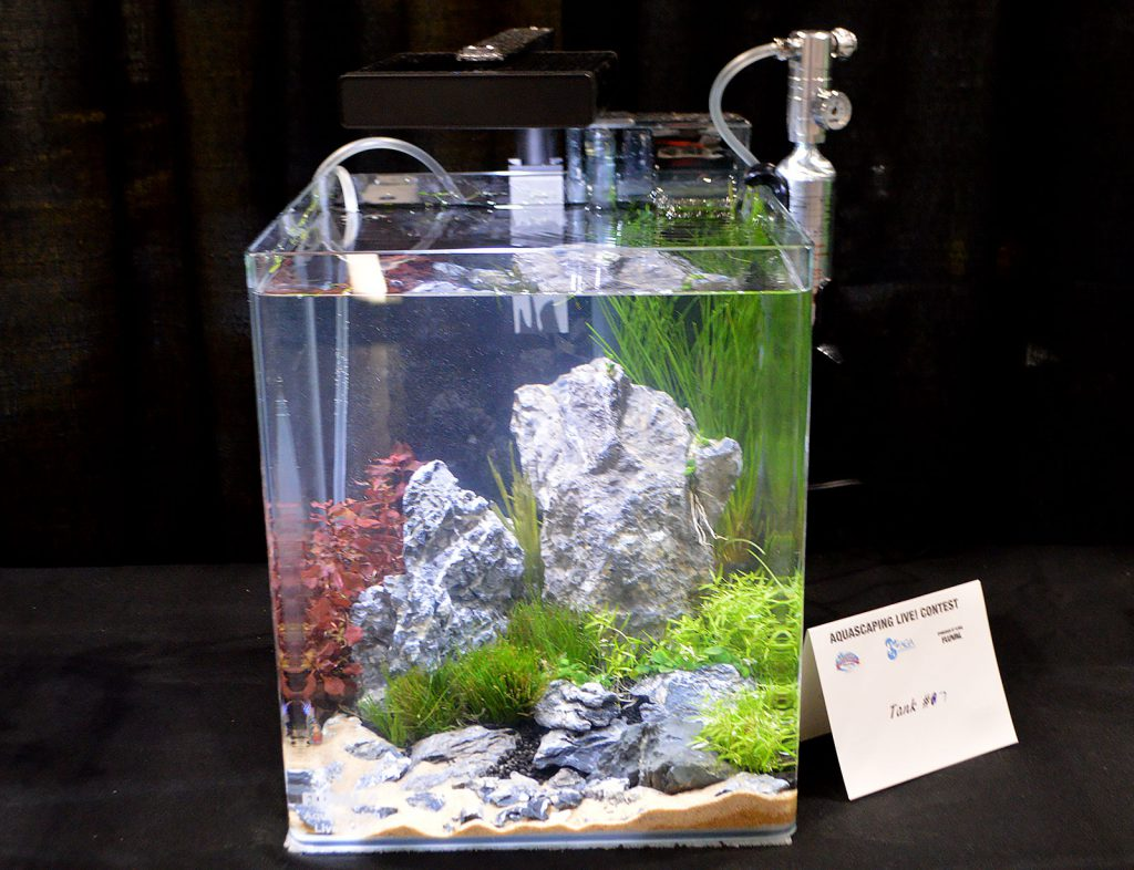 AGA Aquascaping Live 2016 Small Tank Entry #7