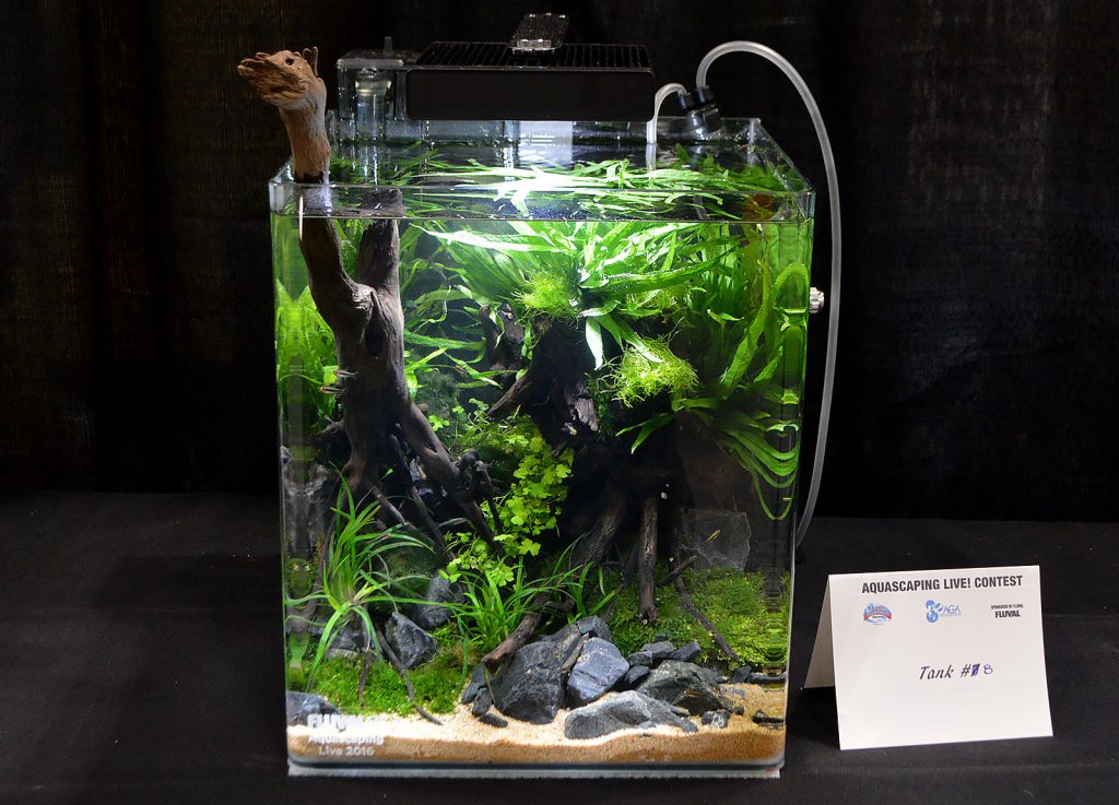 AGA Aquascaping Live 2016 Small Tank Entry #8 - Second Place Award Winner, by Hiep Hong