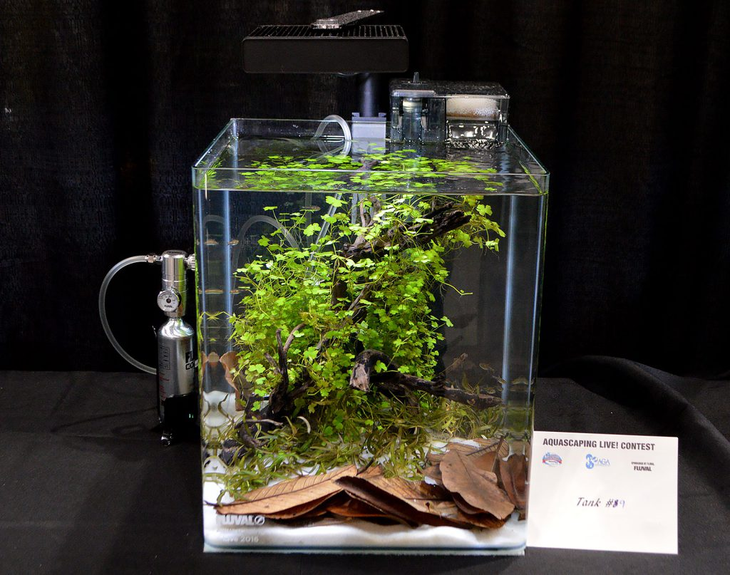 AGA Aquascaping Live 2016 Small Tank Entry #9 - Sixth Place Award Winner, by Ted Judy