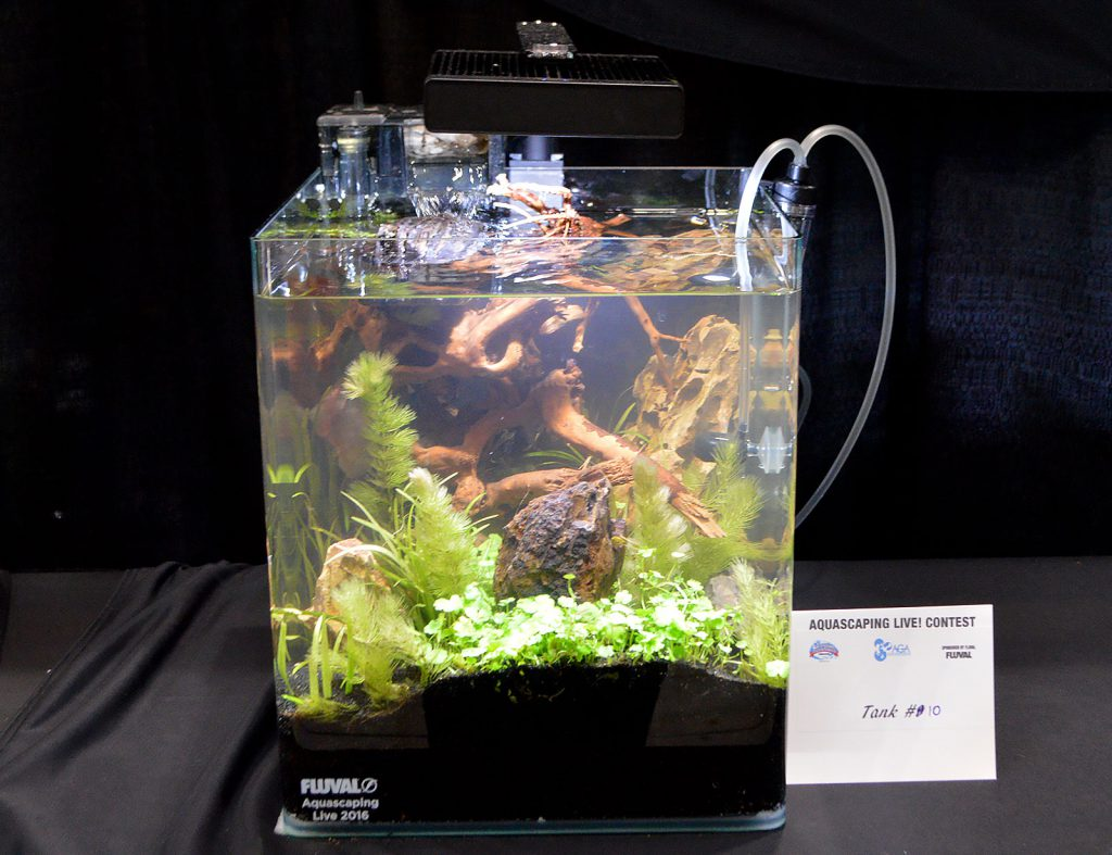 AGA Aquascaping Live 2016 Small Tank Entry #10