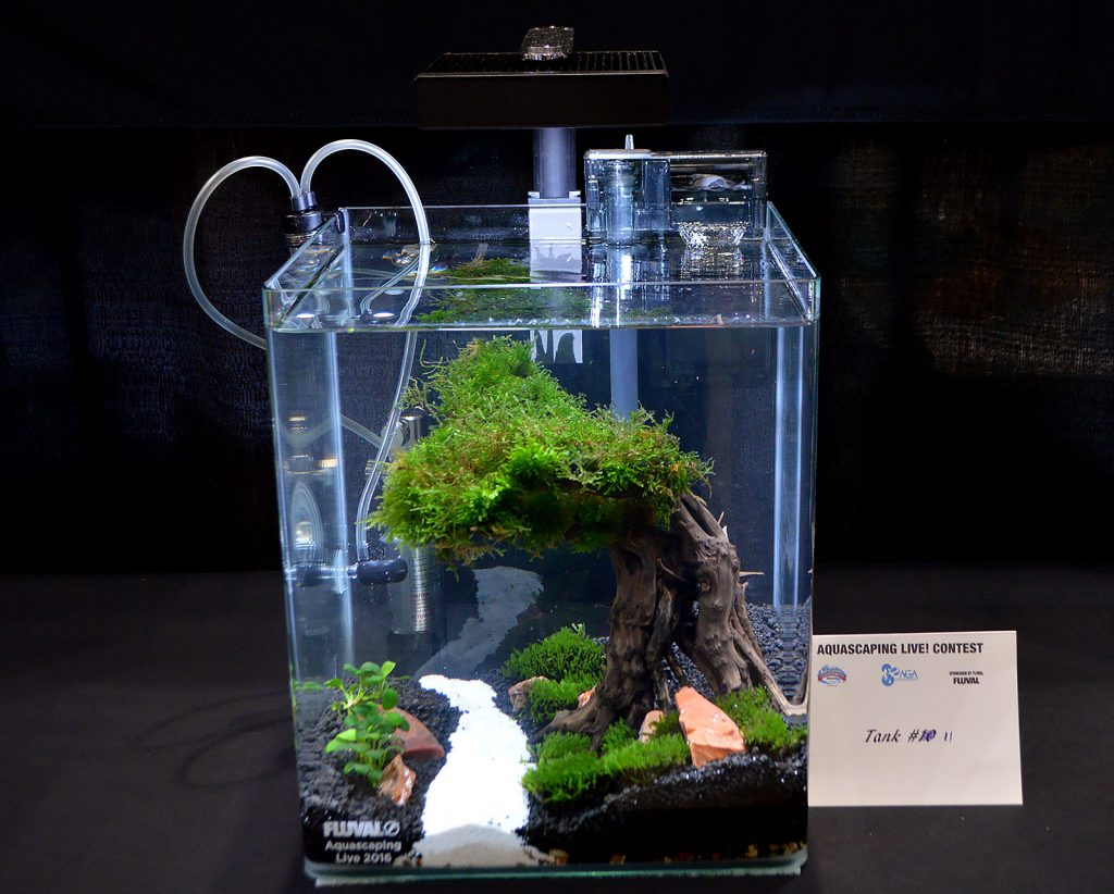 AGA Aquascaping Live 2016 Small Tank Entry #11