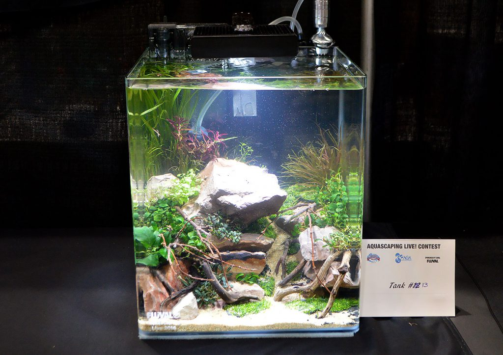 AGA Aquascaping Live 2016 Small Tank Entry #13 - Fifth Place Award Winner, by Shawn McBride
