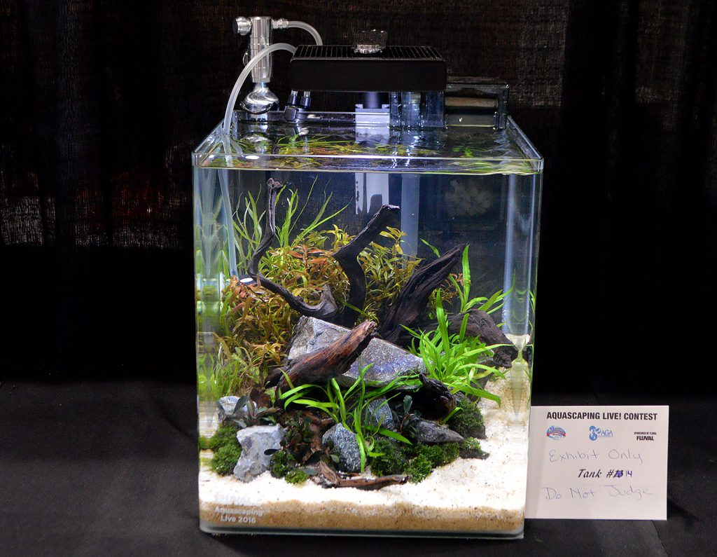 "AGA Aquascaping Live 2016 Small Tank Entry #14 was noted as ""Exhibit Only - Do Not Judge"""