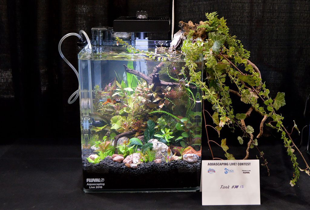 AGA Aquascaping Live 2016 Small Tank Entry #15 - Fourth Place Award Winner, by Kim Moreau-Gronewald