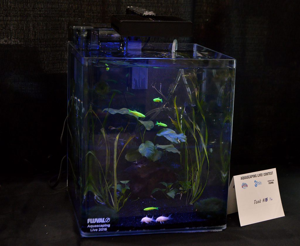 AGA Aquascaping Live 2016 Small Tank Entry #16