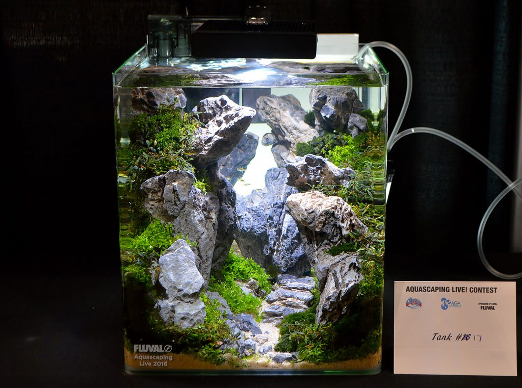 AGA Aquascaping Live 2016 Small Tank Entry #17 - First Place Award Winner, by John Pini
