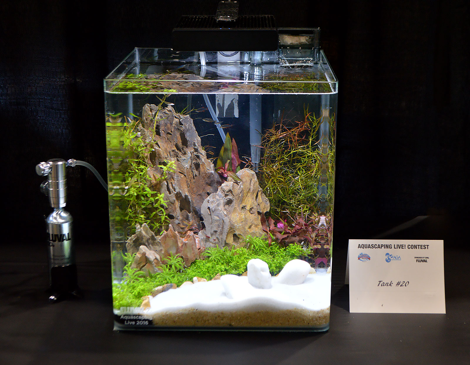aquascaping live 2016 small planted tanks