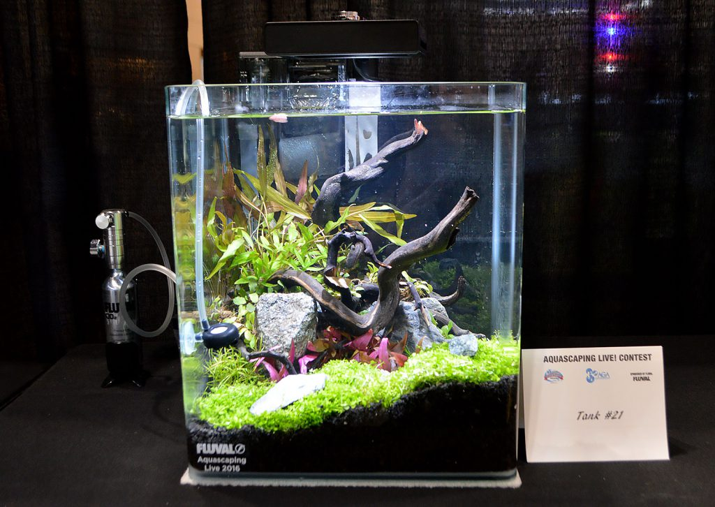 AGA Aquascaping Live 2016 Small Tank Entry #21