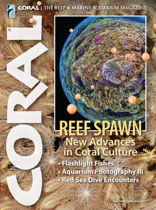 The cover of CORAL Magazine Volume 14, Issue 1 – REEF SPAWN – New Advances in Coral Culture – January/February 2017