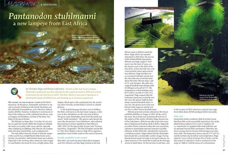 Christian Köpp and Florian Lahrmann introduce us to a pastel beauty, the new-to-the-hobby East Coast Lampeye, Pantanodon stuhlmanni.