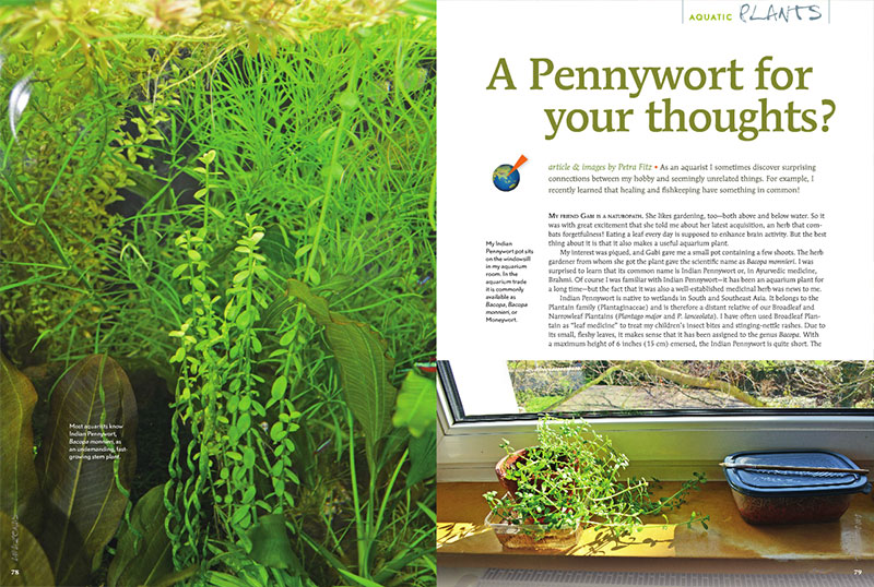 "Petra Fitz investigates the intersection of aquarium plants and medicinal herbs in ""A Pennywort for your thoughts?"""