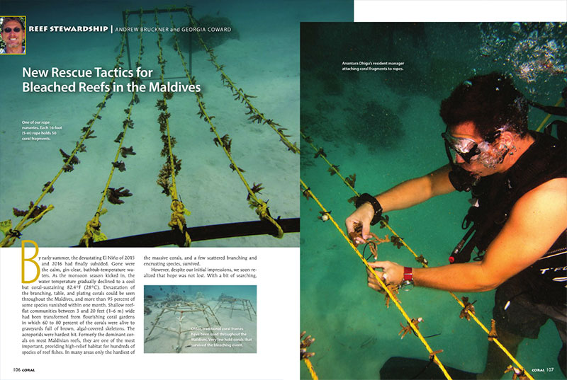 "Andrew Bruckner and Georgia Coward present ""New Rescue Tactics for Bleached Reefs in the Maldives"" in our continued coverage following the devastating El Niño of 2015 and 2016, which left shallow reefflat communities transformed from flourishing coral gardens to graveyards full of brown, algal-covered skeletons."