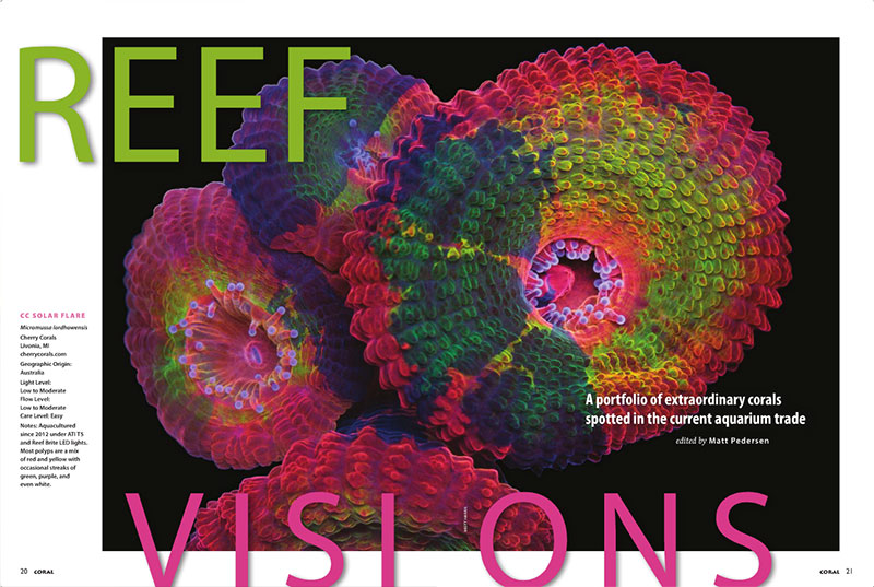 Check out the incomparable corals you'll find in CORAL Magazine's REEF VISIONS! Selected from the best of the best and only in the current issue!