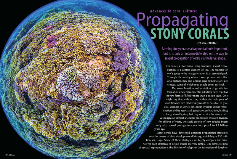 """Farming stony corals via fragmentation is important, but it is only an intermediate step on the way to sexual propagation of corals via the larval stage."" - Samuel Nietzer, in the exclusive article ""Advances in coral culture: Propagating Stony Corals."""