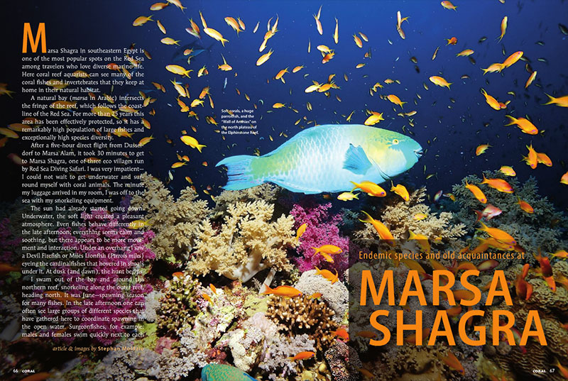 "Dive in and meet ""Endemic species and old acquaintances at Marsa Shagra,"" as recounted by Stephan Moldzio."