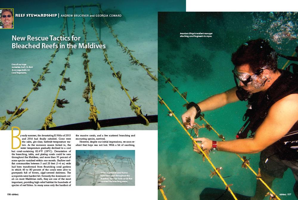 New Rescue Tactics for Bleached Reefs in the Maldives, as published in the January/February 2017 issue of CORAL Magazine