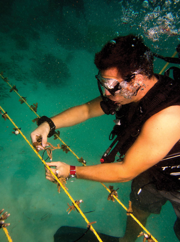 Anantara Dhigu's resident manager attaching coral fragments to ropes.