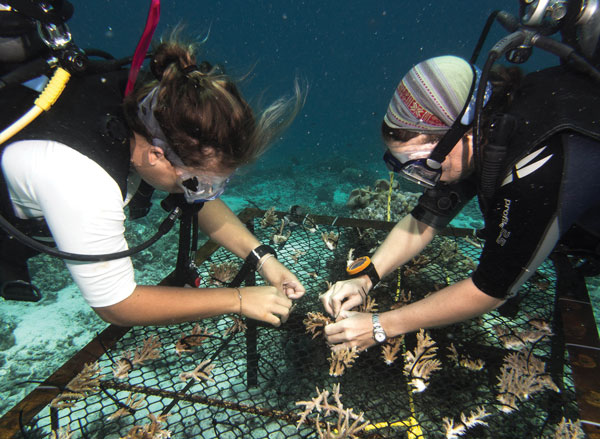 Our team attaches coral fragments to a nursery table on South Malé Atoll.