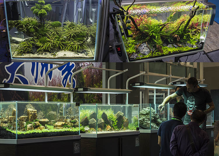 Aquascaping displays and live demonstrations will return to Aquarama this May