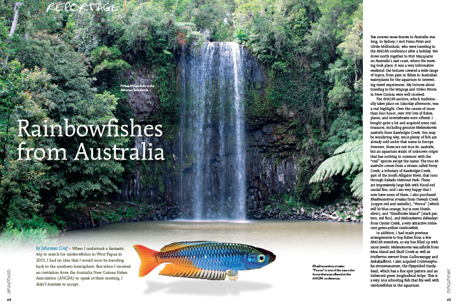 When Johannes Graf received an invitation from the Australia New Guinea Fishes Association (ANGFA) to speak at their meeting, he took the opportunity to travel Australia, collecting rainbowfishes, with the goal of introducing many new varieties to the aquarium hobby.