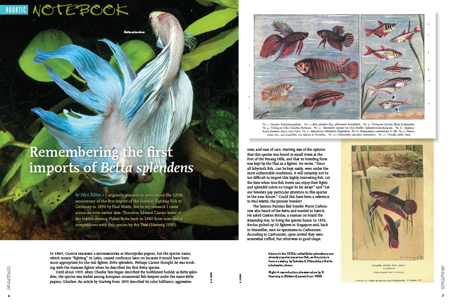 "Our Aquatic Notebook starts off with a historical perspective from author Nico Röhrs, writing ""Remembering the first imports of Betta splendens."""