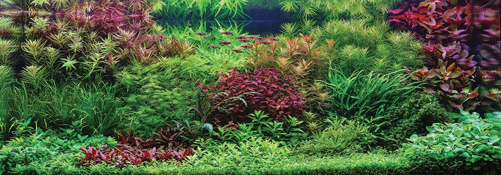 """Fall is Coming,"" Winner of the Dutch Aquascape category. Aquascape by Gabor Vereb from Debrecen, Hungary"
