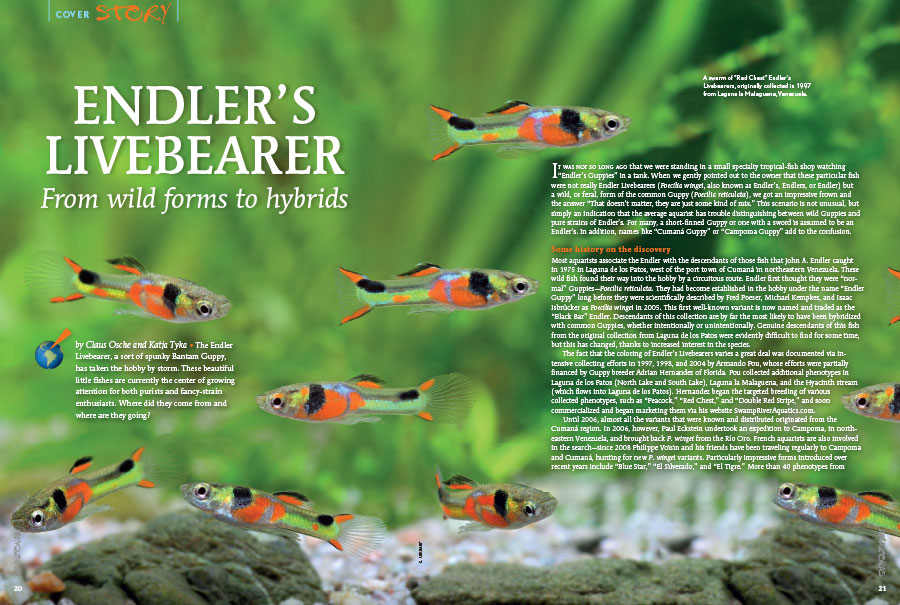 "Get ready to be wowed by some of the most gaudy little fishes you've seen, as authors Claus Osche and Katja Tyka introduce you to ""ENDLER'S LIVEBEARER; From wild forms to hybrids"""