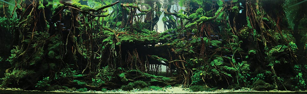 """The Trip,"" Winner of the Aquatic Garden, 200–320 L category. Aquascape by Yang Yufan from Chingquing, China"