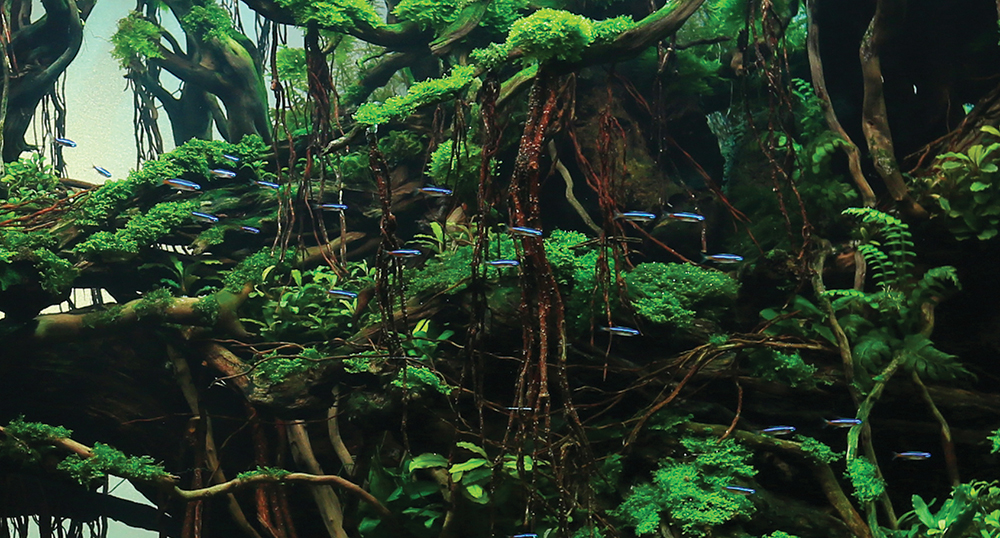 "A slice of ""The Trip"", 1st place winner of the Aquatic Garden, 200–320 L category. Yang Yufan, of Chingquing, China, created this masterpiece. See the full aquascape and learn more about it below."