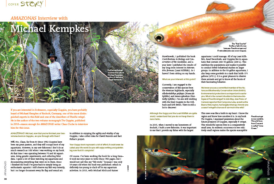 If you are interested in livebearers, especially Guppies, you have probably heard of Michael Kempkes of Bocholt, Germany, one of the most distinguished experts in this field and one of the describers of Poecilia wingei. He is the author of the two-volume monograph The Guppies, published in 2010—reason enough for AMAZONAS writer Claus Osche to interview him for this issue.