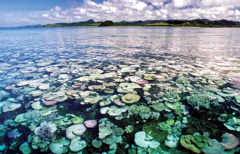 Blue skies, hot water—many beautiful stony coral colonies are bleaching in this Fiji scene recorded by Bruce Carlson in 2000.
