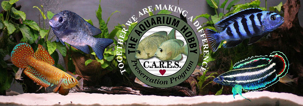 The CARES Program is dedicated to preserving at-risk fish in the hobby through captive breeding