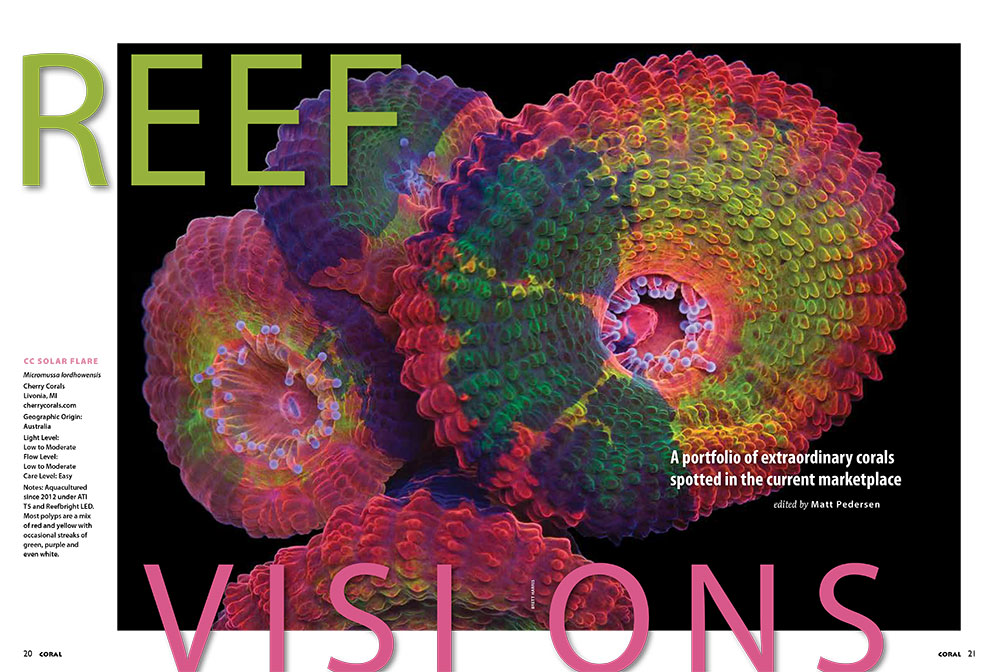 The current issue's Reef Visions features this beautiful CC SOLAR FLARE Micromussa lordhowensis, from Cherry Corals.