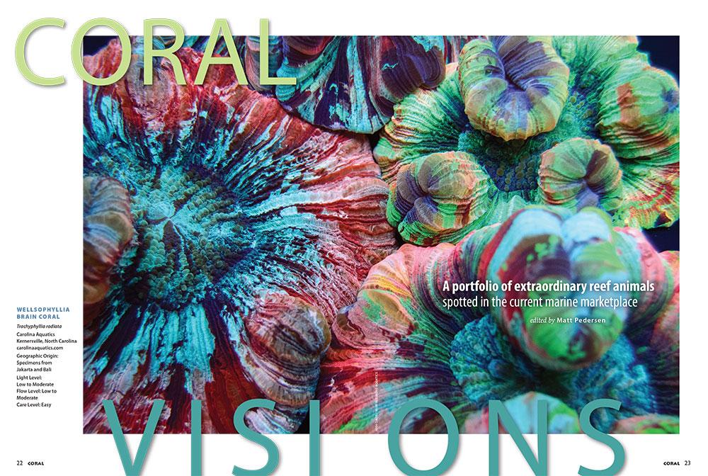 Wellsophyllia Brain Corals, by Carolina Aquatics, opened the September/October 2016 installment of the column