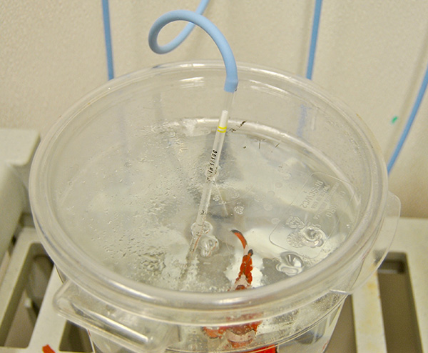 Aeration is provided via a pipette inserted into the cover of each bucket.