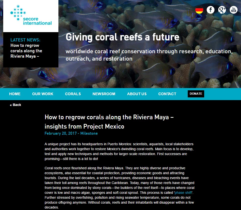 Click to learn more about SECORE's efforts to restore Mexico's coral reefs in this in-depth online report.