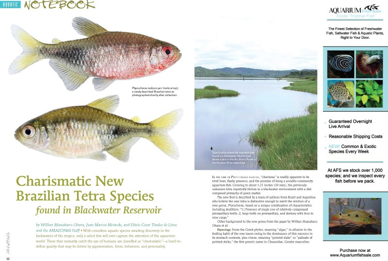 "Aquatic Notebook highlights the ""Charismatic New Brazilian Tetra Species found in Blackwater Reservoir,"" by by Willian Massaharu Ohara, Juan Marcos Mirande, and Flávio Cesar Thadeo de Lima and the AMAZONAS Staff."