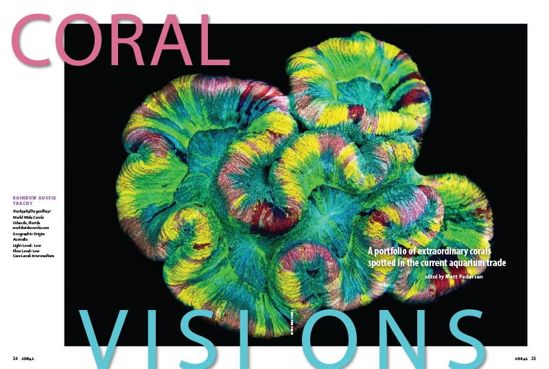 CORAL VISIONS opens with a stunning Trachyphyllia from World Wide Corals. Turn the page to see what other stunning surprises wait inside, and we've upped the ante with an expanded online bonus installment, offering even more!