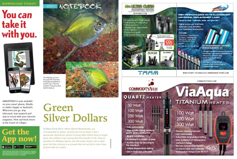 "More treasures await in our Aquatic Notebook, such as""Green Silver Dollars,"" by Hans-Georg Evers."